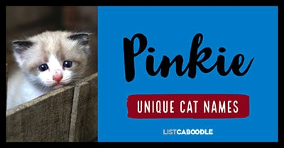 Pinkie - Unique Cat Names