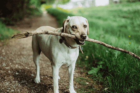 how long do dogs live image