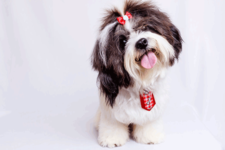 where do dogs like to be pet image