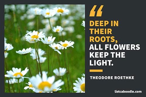 Roethke quote image