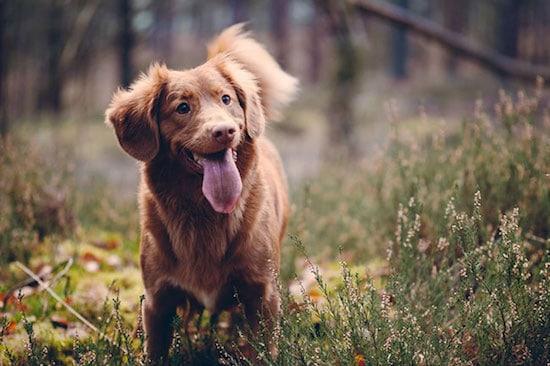 dog-walking-image
