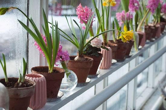 jumpstart-your-gardening-image