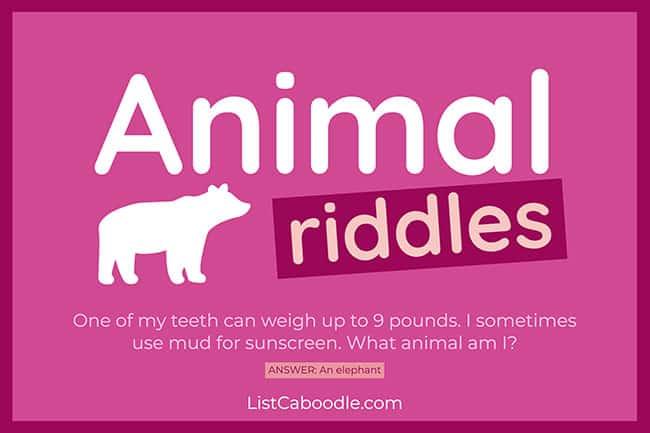 Kids animal riddles image