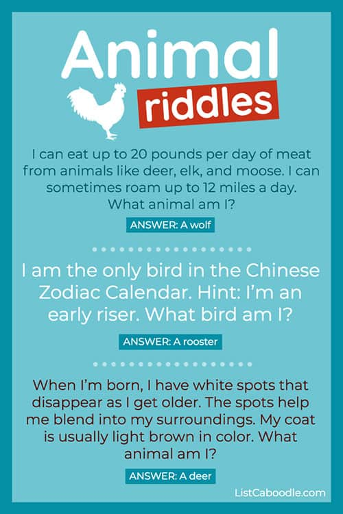 animal riddles rooster