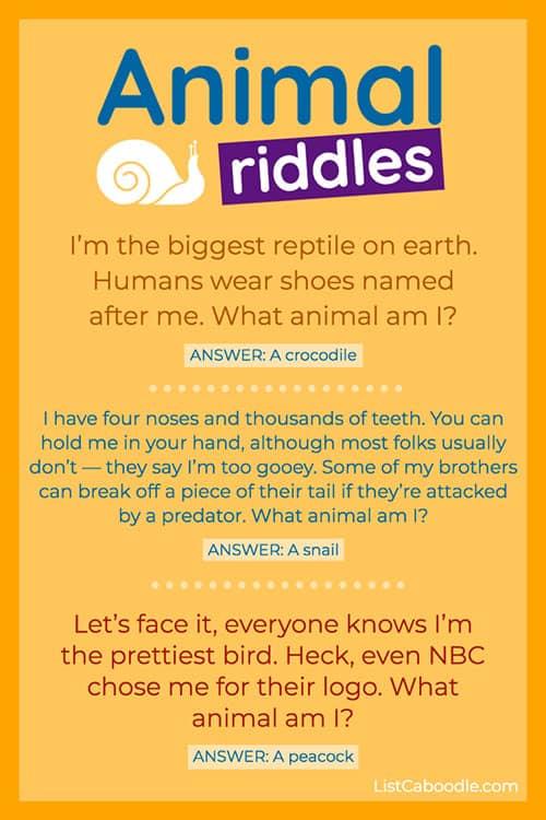 Quiz snail image
