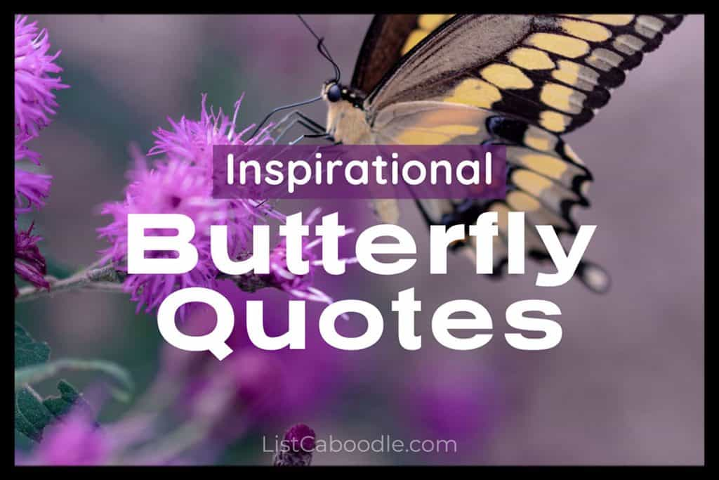 best butterfly quotes image