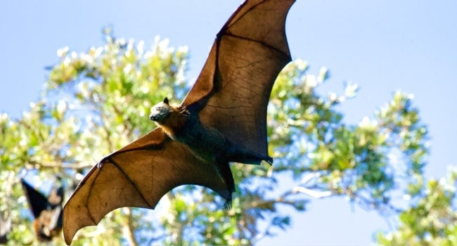 Animal myths - bats