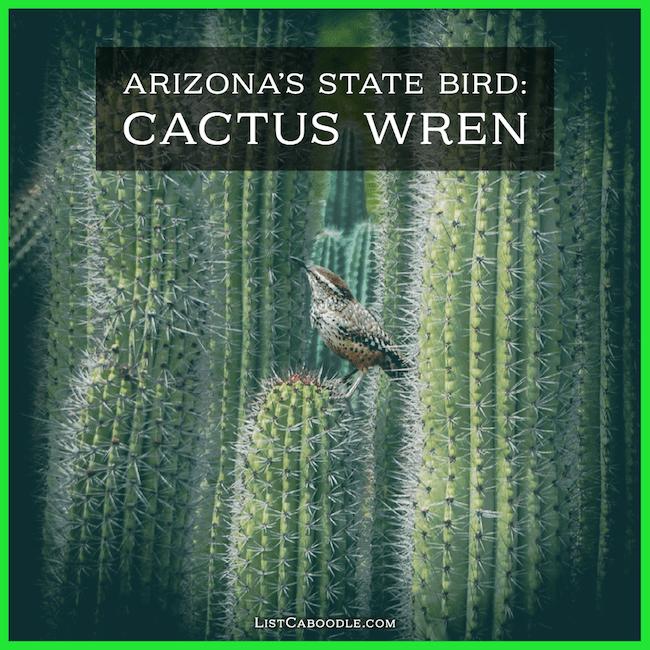 cactus wren - state birds