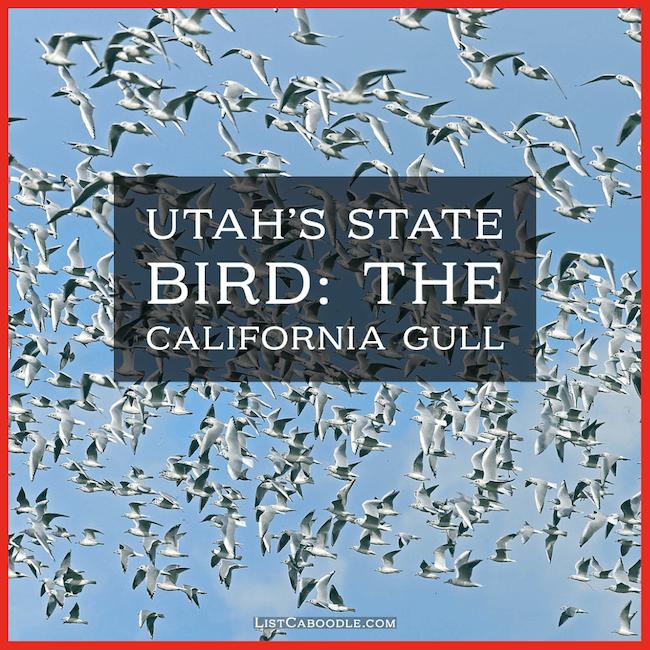 California gull - state birds