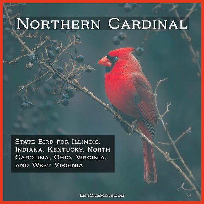Cardinal - America's favorite