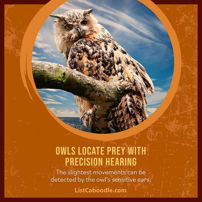 Owls superpower hearing