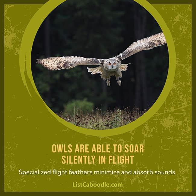 Owls superpower silent flight