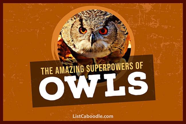 Owl title image