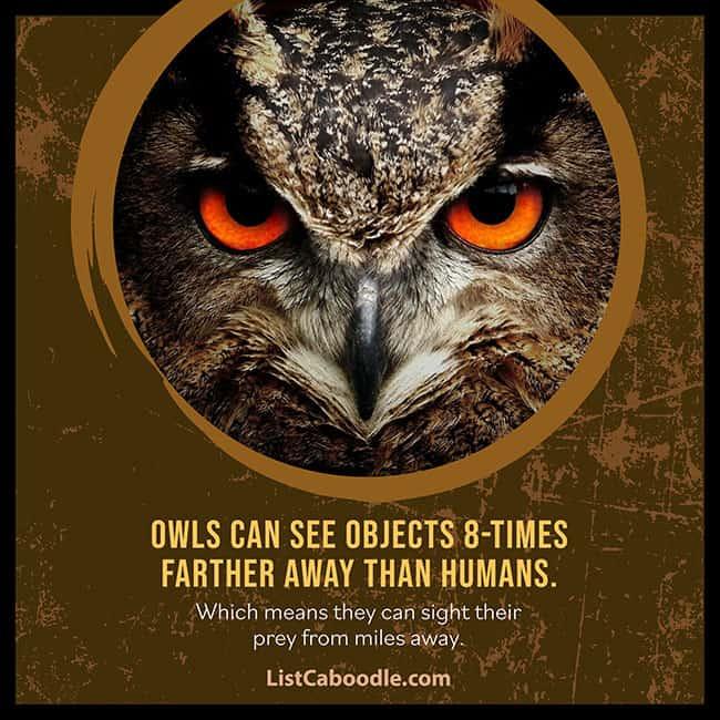 Owls vision superpower