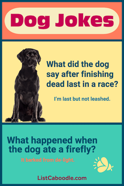 Best Dog Jokes