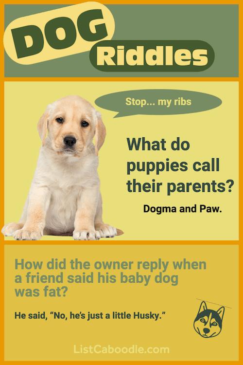 Cute Dog Riddles