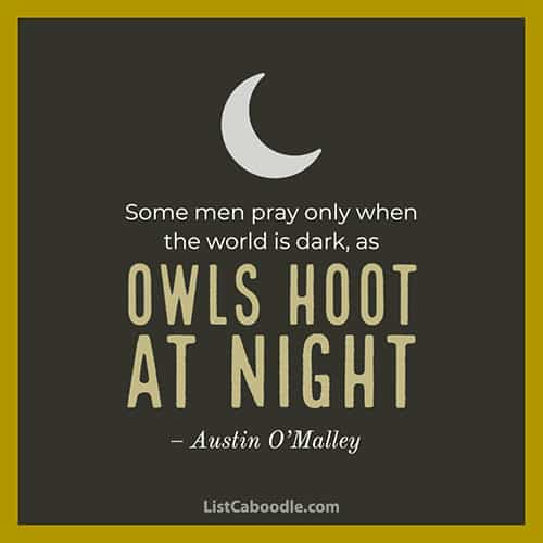 Owls at night quote