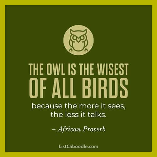 Wise owl quote