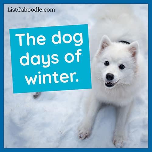 Snow dog captions