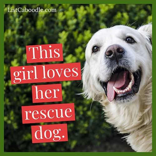 Rescue dog captions