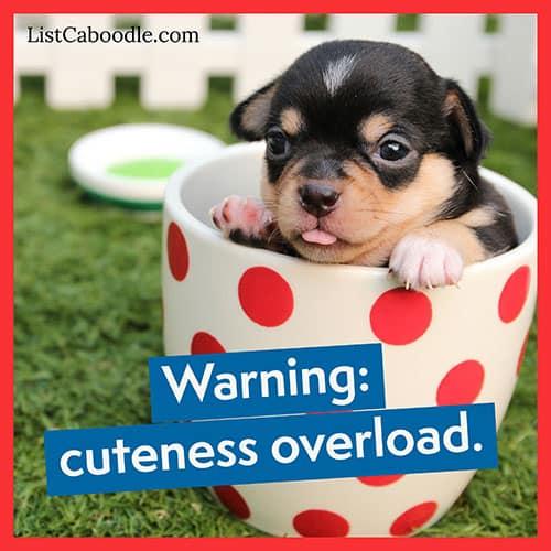 Cuteness overload puppy