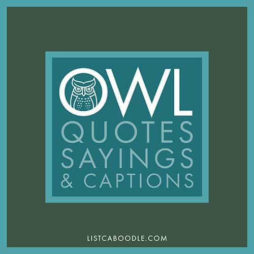 Owl Quotes, Sayings, Captions