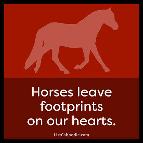 Horse lover captions