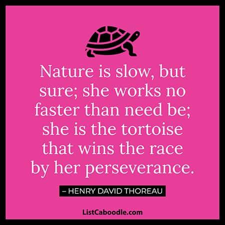 Thoreau turtle quote