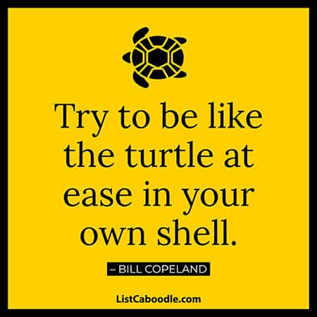 Turtle quotes about life