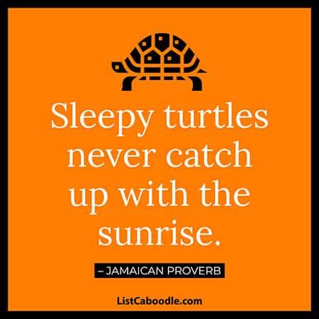 Sleepy turtle proverb
