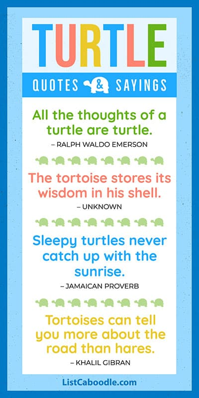 Turtle quotes and sayings list