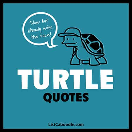 Turtle quotes image