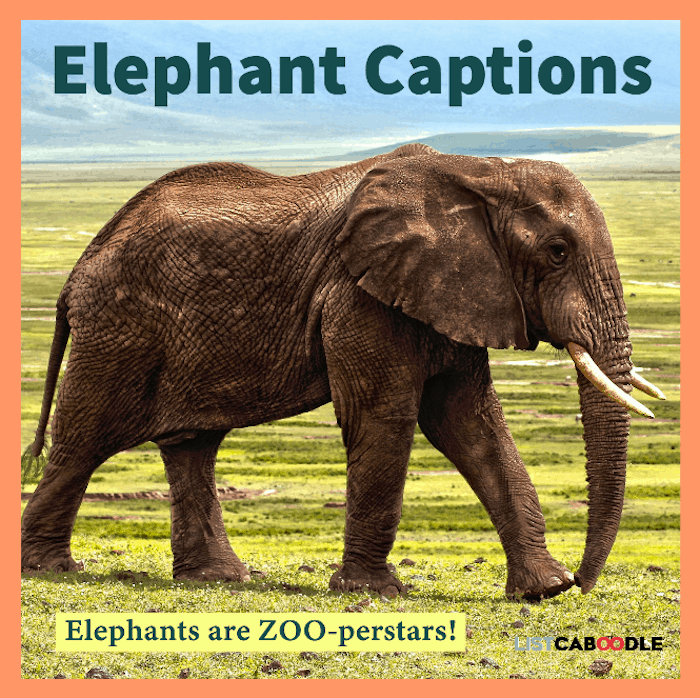 Elephant captions