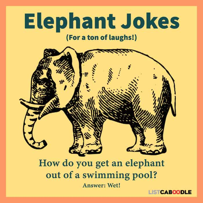 Good elephant jokes