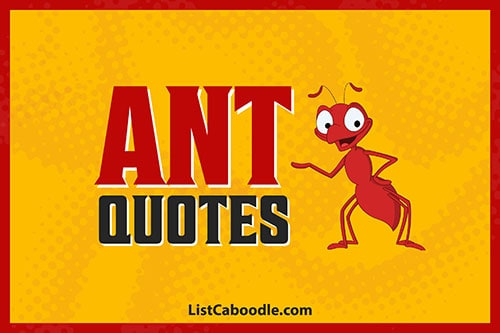 Ant Quotes and Sayings