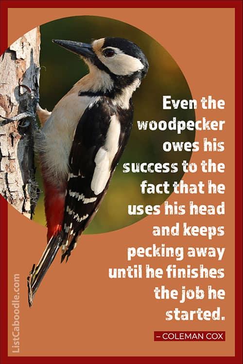 Coleman Cox inspirational woodpecker quote