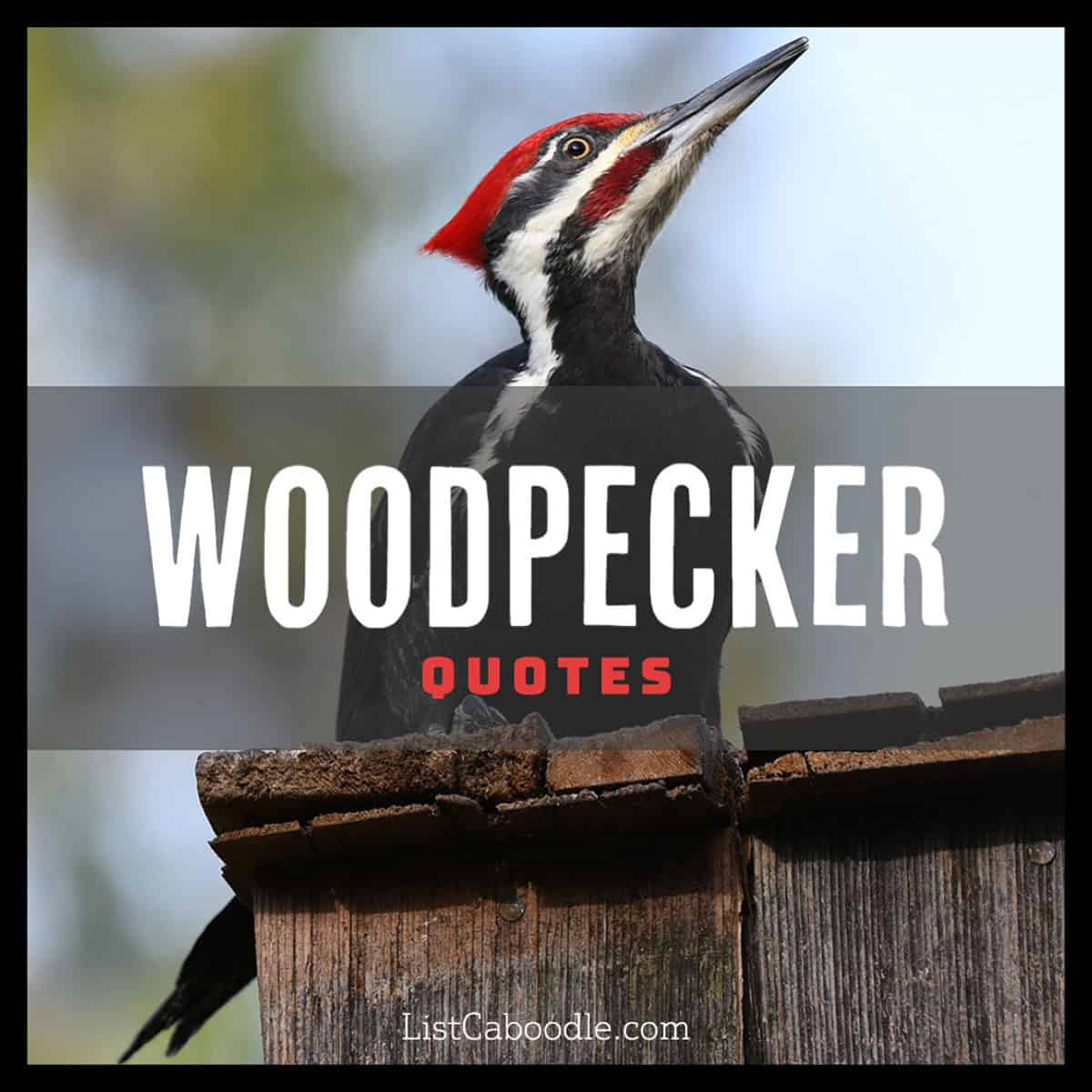 Woodpecker quotes image