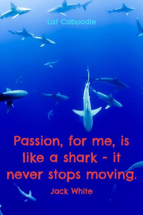 passion like a shark