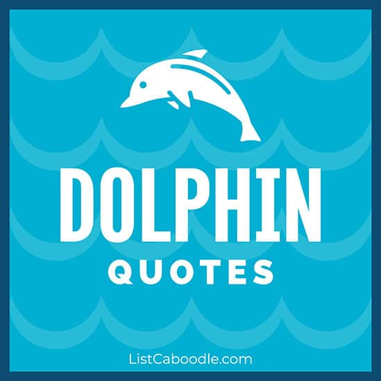 Dolphin quotes image