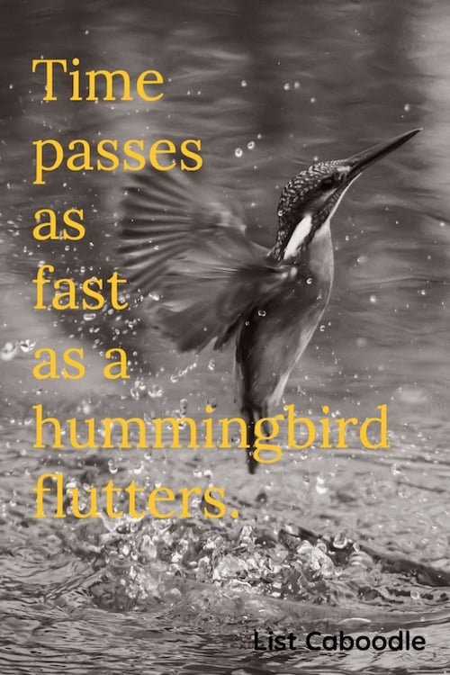 Time passes as fast as a hummingbird flutters quote
