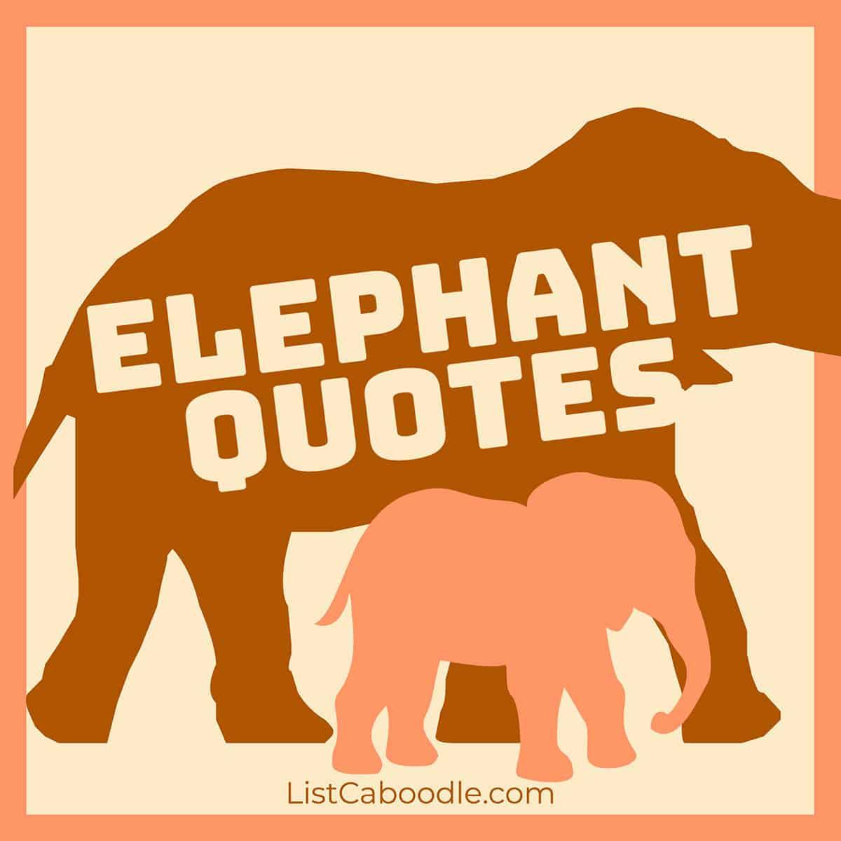Elephant quotes image